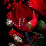 rote Amaryllis und rote Ilexbeeren