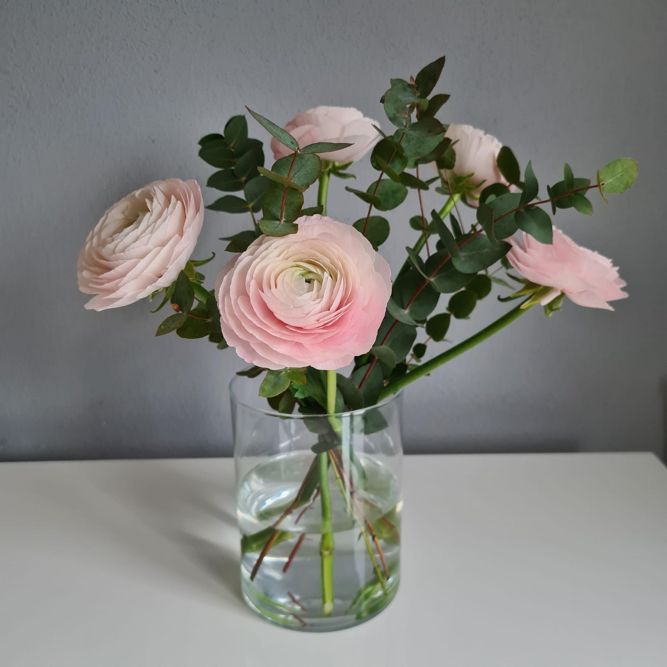 rosa Ranunkeln in Glasvase
